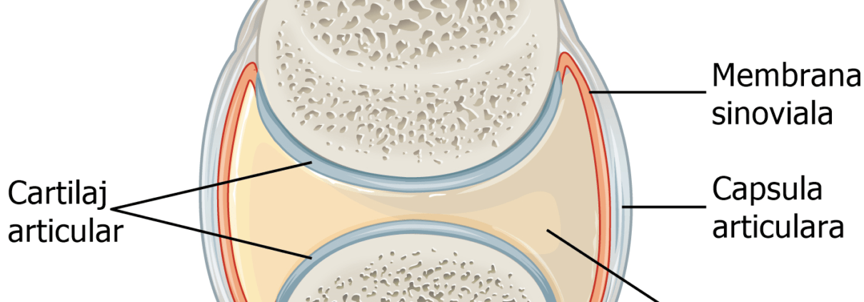 de ce trosnesc oasele la gat comprimate complex de glucosamină condroitină