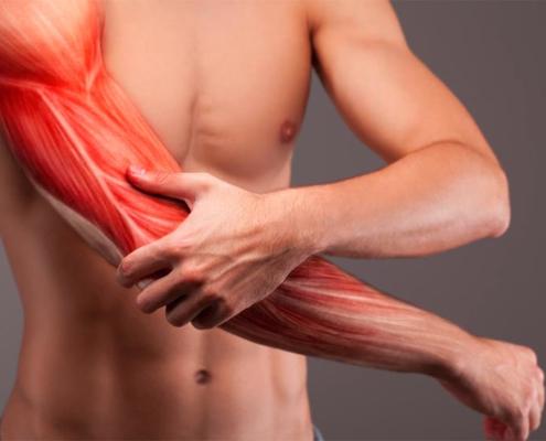 Febră Musculară Febra Musculara