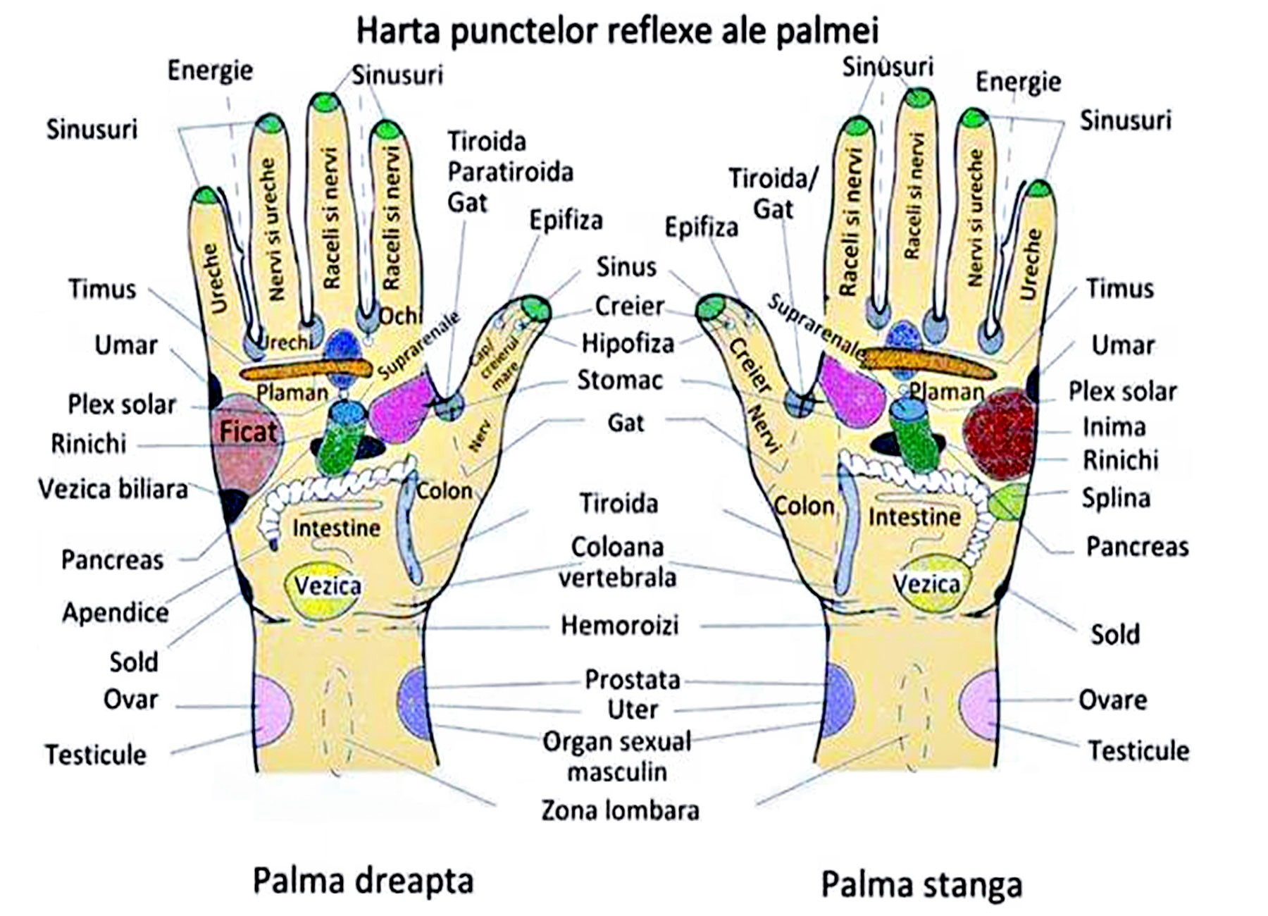 Reflexoterapie Reflexoterapia Reflexoterapiei